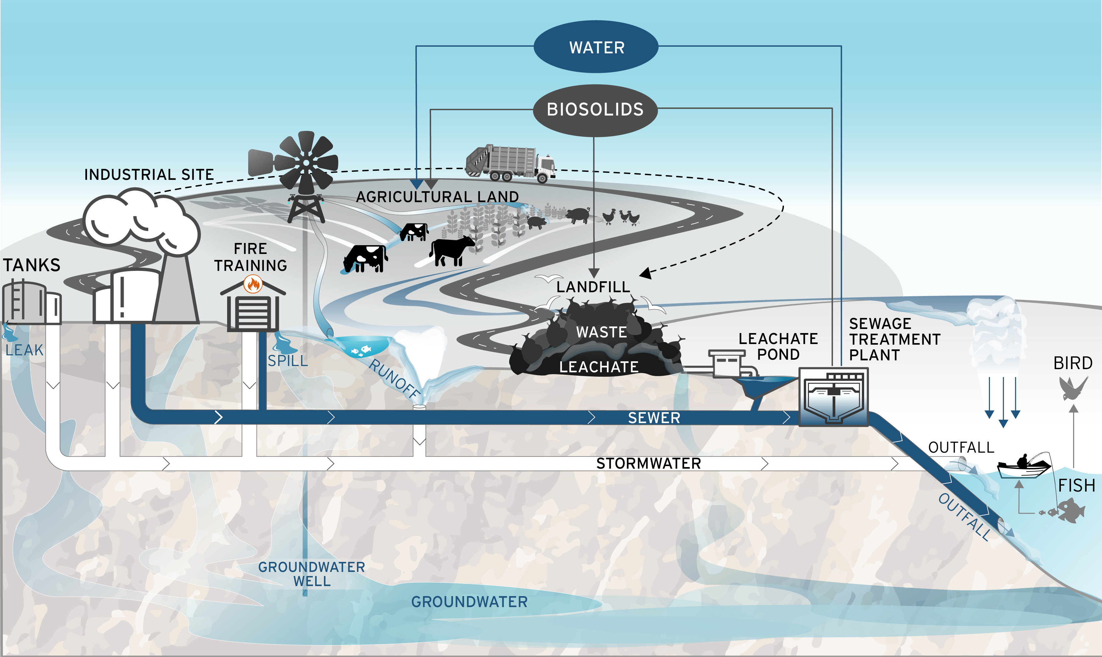 An illustrated diagram of PFAS movement from industrial sites and pathways for human and environmental exposure.